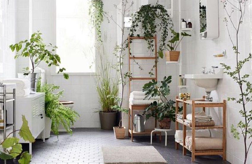Abbiamo selezionato vasi e fioriere per la tua casa, perfetti per dare risalto a piante e fiori e arredare l'appartamento. Le Piante Da Interno Per Arredare Il Bagno Brokey