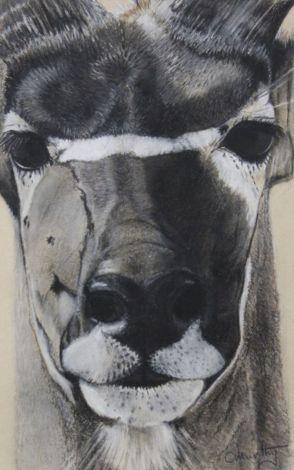 kudu 1.0 IMG_2301