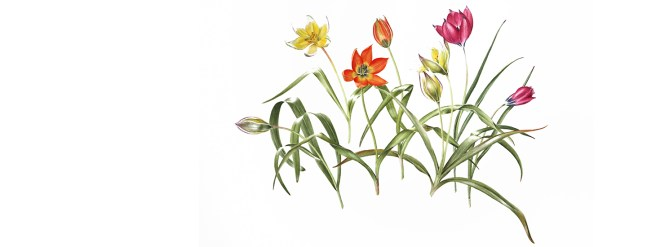 Colours of the Winter Garden: Watercolours by botanical artist Sue J Williams SBA 14th February to 24th March 2017
