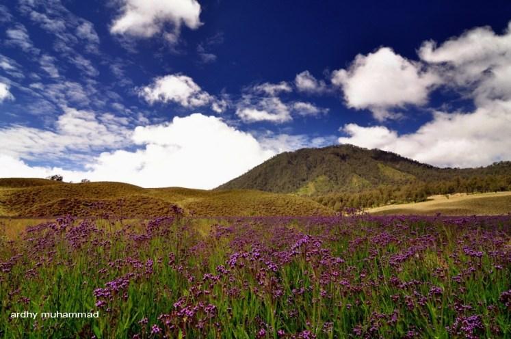 sumber : ardhy-muhammad.blogspot.com