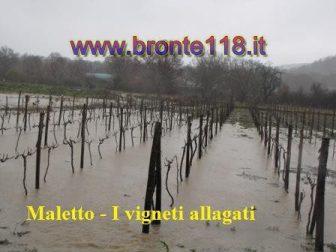 malt10032012 11