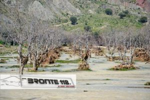 2015watermarked-Frutteti devastati 2