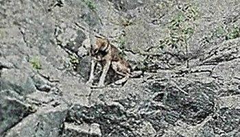 GOLE DELL'ALCANTARA: SALVATO CANE IN BILICO SULLA ROCCIA