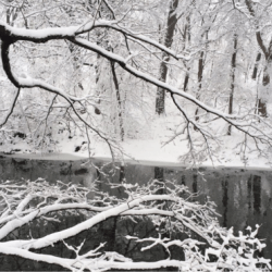 The Bronx River's New Years Resolutions