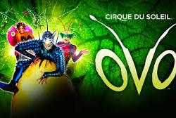 Checking out Cirque Du Soleil: OVO