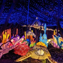 Holiday Lights at the Bronx Zoo + Discount Code