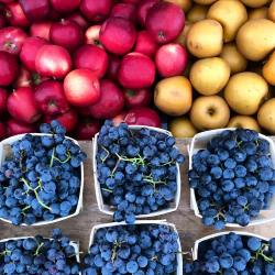 Weekly Greenmarket Reopening for the Season in the Bronx