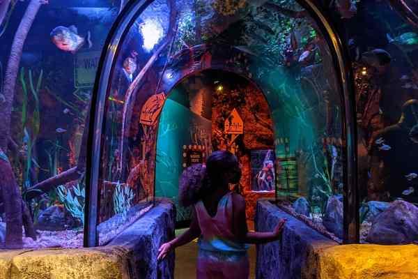 New SEA LIFE Aquarium & LEGOLAND Discovery Center at American Dream