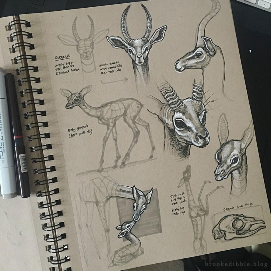 Quick study sketches in pen on toned tan paper of gerenuks