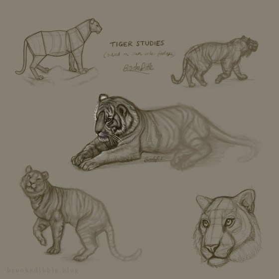 Tiger sketch studies on iPad Pro