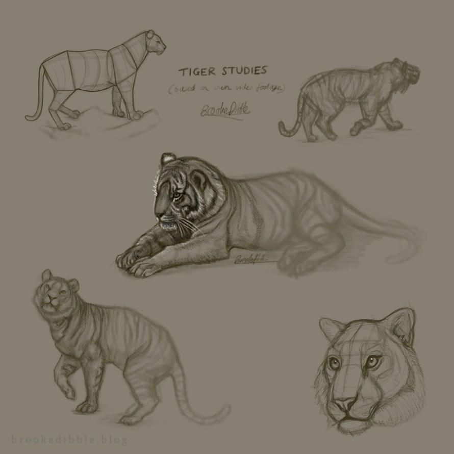 Tiger sketch studies on iPad Pro