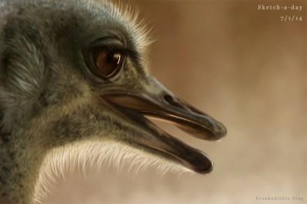 Sketch-a-day 2014 digital art - 4hrs approx Ostrich study
