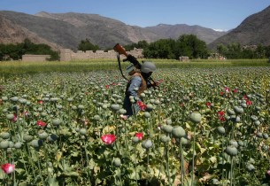 An Afghan policeman destroys poppies during a campaign against narcotics in Kunar province, April 29, 2014. REUTERS/Parwiz (AFGHANISTAN - Tags: CRIME LAW DRUGS SOCIETY) - RTR3N2WF