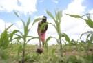 zimbabwe_drought001