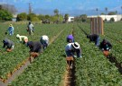 farm_workers001