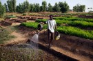 mali_agriculture002
