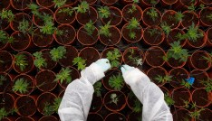 ending the u s government s war on medical marijuana research the upside down world of marijuana legalization