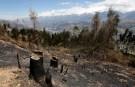 peru_deforestation001