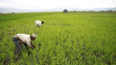 rice_farmer001_16x9
