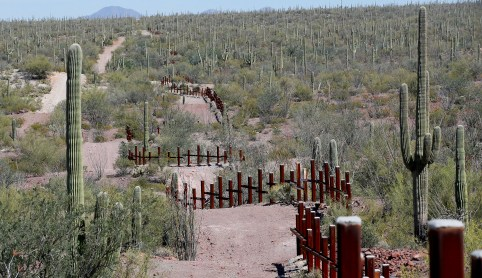 The vehicle barrier on the U.S.- Mexico border weaves around Saguaro cactus in the Sonoran desert