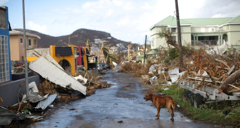 A dog stands in a street affected by Hurricane Irma in Cole Bay, Sint Maarten (Saint Martin) island, Netherlands, September 16, 2017. REUTERS/Andres Martinez Casares TPX IMAGES OF THE DAY - RC1CCAF9A8D0