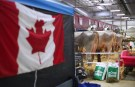 Cows are fed inside the exhibition hall as a Canadian flag is displayed nearby during the World Dairy Expo in Madison, Wisconsin, U.S., October 3, 2018.  REUTERS/Ben Brewer - RC15D1230E20
