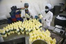 Dairy workers label plastic bottles of yoghurt milk at the L & Z milk processing factory in Nigeria's northern city of Kano January 19, 2016. REUTERS/Akintunde Akinleye - GF20000100143