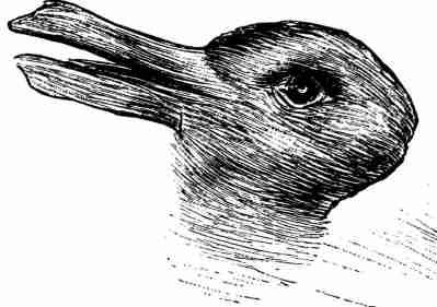 Rabbit bunny illusion