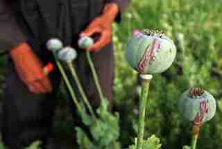 Sap oozes from poppies after they are scratched, a process to get opium from poppies, in a village outside Balkh province, about 500 km (310 miles) north of Kabul May 6, 2006. The illegal narcotics trade dominates Afghanistan's economy, accounting for 60 percent of its gross domestic product and 87 percent of the world's supply. Heroin and morphine are derived from opium, which comes from poppies. REUTERS/Ahmad Masood