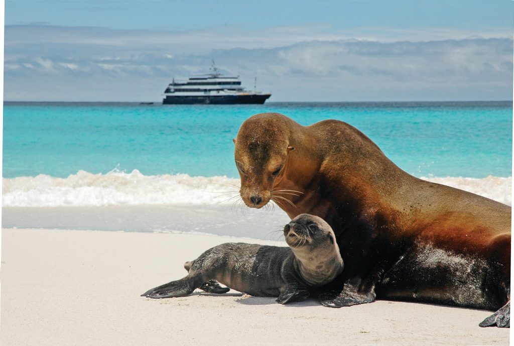 Galapagos-Islands-Lindblad-Expeditions