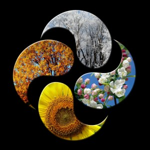 paisley-shaped images representing each of the 4 seasons. Clockwise from top: winter - leafless tree branches with snow, spring: flower blossoms, summer: close-up of a yellow flower, fall: orange, red, & yellow leaves