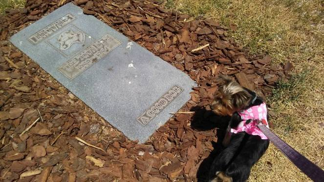 Tallulah visits Brownie's grave in Riverfront Park in downtown Daytona Beach, FL.
