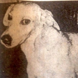 Brownie the Post Office Dog lived at the Post Office on Beach Street from 1955-1970. He is buried at the Post Office.