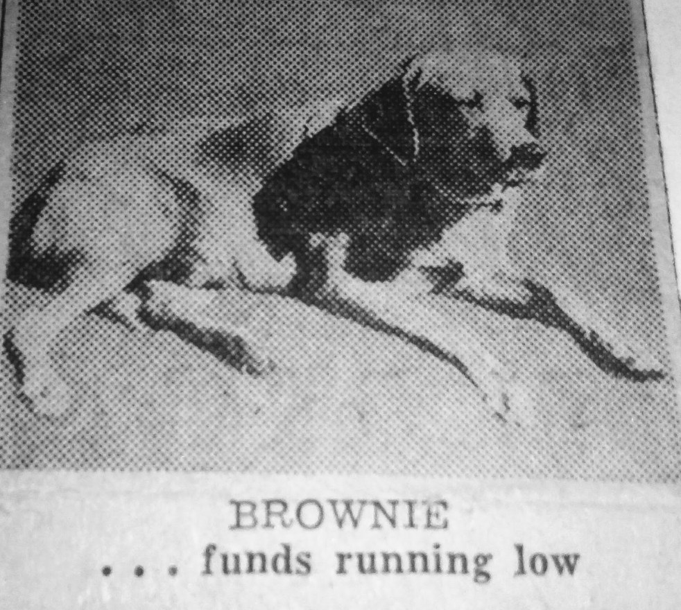 May 11, 1952: This photo of Brownie is one that only appears to have been used in this article. It's probably in the Daytona Beach News Journal archives.