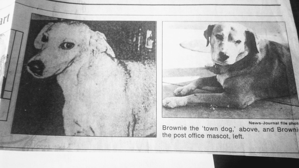 Daytona Beach Town Dog and Post Office Brownies
