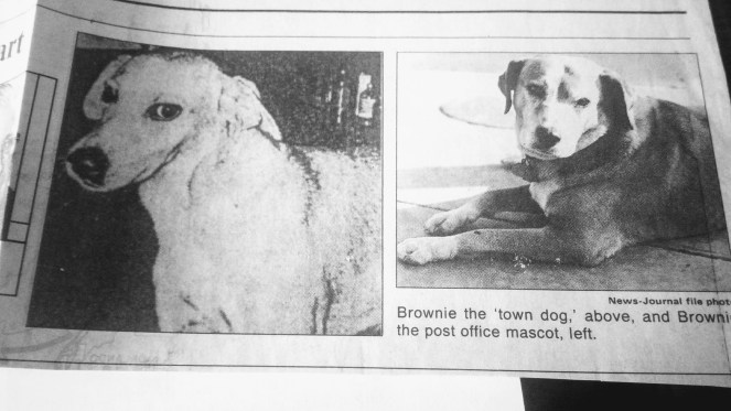 Daytona Beach Town Dog and Post Office Brownies