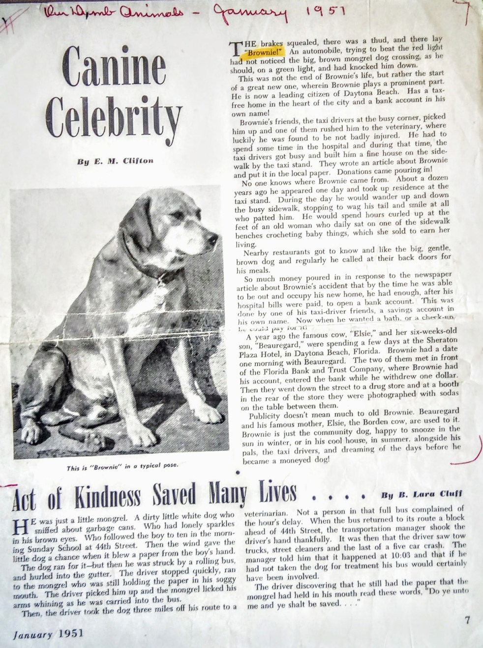 January 1951 - Brownie the Town Dog of Daytona Beach appears in Our Dumb Animals