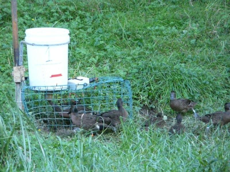 feeder-use-may-22-09