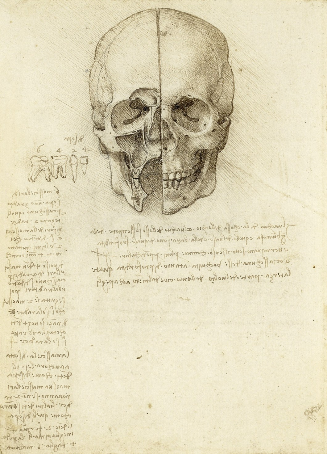 Da Vinci sketch of skull