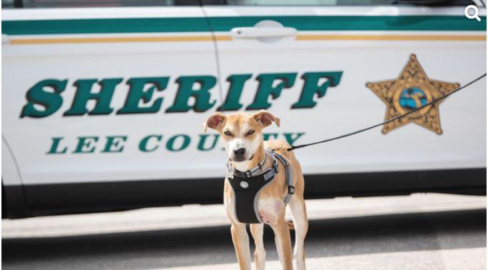FL Sheriff Dog_1552759646286.JPG.jpg