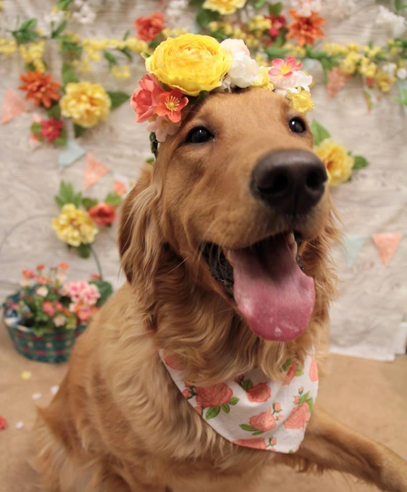 doggy_1554930687264.jpg