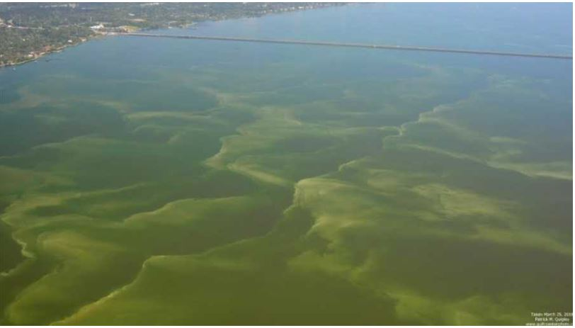 ALGAE BLOOM_1561384384335.JPG.jpg