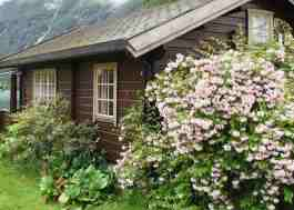 "A one-story, log, ""dream cabin,"" surrounded by flowers and flowering shrubs. Two 9-pane windows are visible on one side."