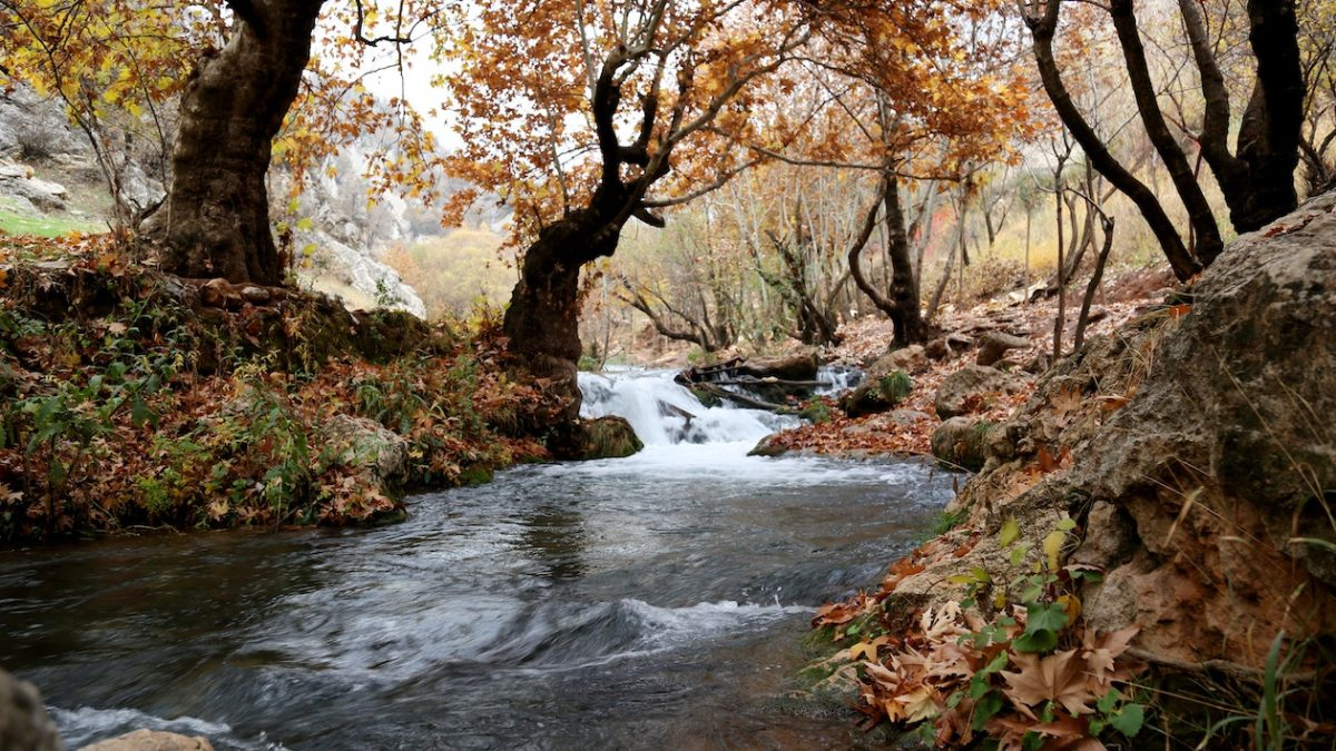 Forest stream following the path of least resistance create by the structure of the stream bed