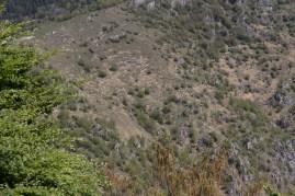 Ausblick auf unseren Samstags-Trail