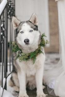 vinterbrud-vinterbryllup-husky