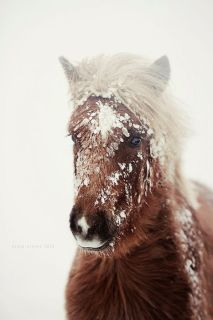 vinter-snø-hest