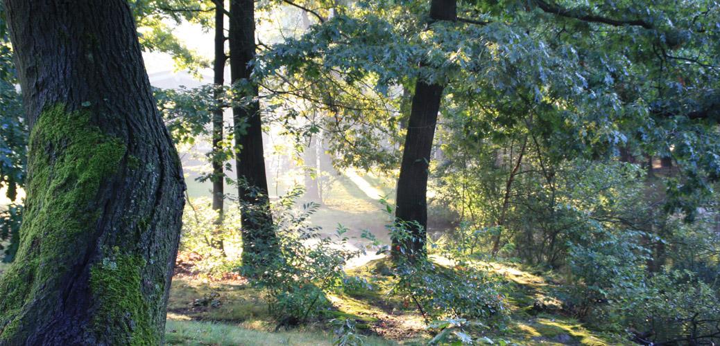 Week van het bos herdenkt WOI