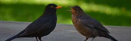 Tel jij ook vogels dit weekend?
