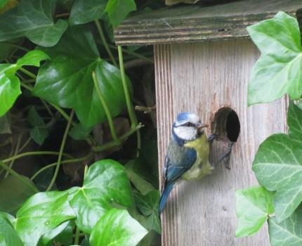 Nestkasten voor meer natuur